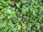 Delicious organic mesclun mix from Chickadee Creek Farm in Pennington NJ, Hopewell Twp