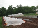 covers over freshly planted squash and cucumbers