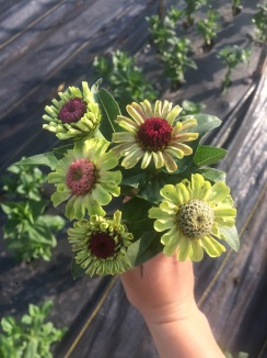 Flowers! - 5 of 18