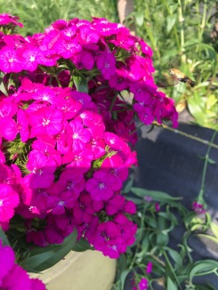 Flowers! - 9 of 18