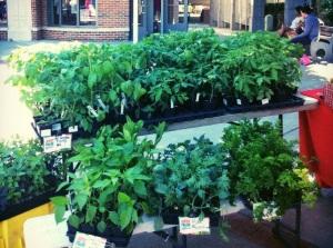 organic, garden plants, summit, pennington, princeton, rutgers, farm, denville, hoboken, new jersey