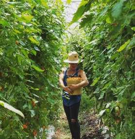 nicole cherry tomatoes.jpg